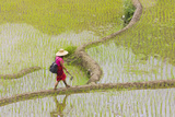 Igorot Woman  Rice Terraces  Agriculture  Philippine Cordilleras  Philippines