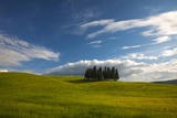 Tuscan Hill Side Cypress Tree Grouping  Italy