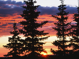 View of Sunrise with Spruce Trees at Medicine Bow National Forest  Wyoming  USA
