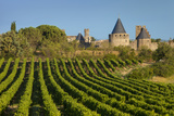 Dawn in a Vineyard Overlooking La Cite Carcassonne  Languedoc-Roussillon  France