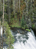 View of Yellowstone Firehole River Falls  Yellowstone National Park  Wyoming  USA