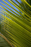 Palm Frond Natural Pattern  Bavaro  Higuey  Punta Cana  Dominican Republic