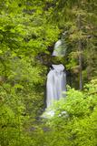 Curly Creek Falls  Lewis River  Gifford Pinchot National Forest  Washington  USA