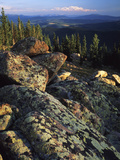 Lichen Covered on Boulders on Continental Divide  Wyoming  USA