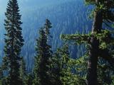 View of Mt Rainier National Park  Washington  USA