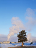 Old Faithful Geyser  Lodgepole Pine  Yellowstone National Park  Wyoming  USA