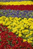 Flower Garden at Dunedin Railway Station  South Island  New Zealand