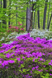 Winterthur Gardens  Delaware  USA