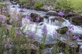 Rock Creek  Pioneer Mountains  Beaverhead-Deer Lodge National Forest  Montana  USA