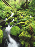 View of Olympic National Park  Stream  Moss-Covered Rocks  Washington  USA