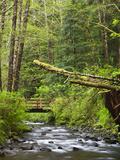 Short Sand Creek  Oswald West State Park  Oregon  USA