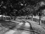 Row of Trees and Country Lane at Dawn  Bluegrass Region  Kentucky  USA