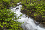 Hellroaring Creek Flowing Strong in Spring Near Whitefish  Montana  USA