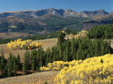 Autumn Trees with Mountains  Beartooth Highway  Colter Pass  Wyoming  USA
