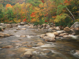 Swift River in Autumn  White Mountains National Forest  New Hampshire  USA