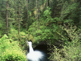 Punch Bowl Falls  Columbia River Gorge National Scenic Area  Oregon  USA