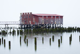 Old Fishing Cannery on the Columbia River  Astoria  Oregon  USA
