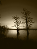 Trees Reflected in Water  Reelfoot National Wildlife Refuge  Tennessee  USA