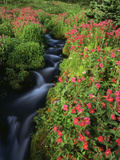 Glacier-Fed Stream  Pink Monkey-Flowers  Mt Rainier National Park  Washington  USA