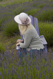 Woman in Straw Hat on Old Purple Chair in Garden of Lavender  Sequim  Washington  USA