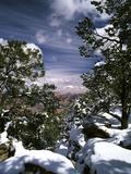 Grand Canyon National Park  Trees Covered with Snow  Arizona  USA