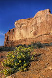 Wildflowers and Sandstone Rock Formation  Arches National Park  Utah  USA