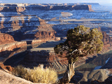 Sunrise View of Dead Horse Point State Park and Colorado River  Utah  USA