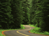Road Through Forest  Olympic National Park  Washington  USA