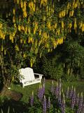 Garden Bench  Schreiner's Iris Gardens  Keizer  Oregon  USA