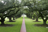 Oak Alley Plantation  Alley of Oaks  Virginia Live Oaks  Louisiana  USA