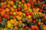 Cherry Tomatoes at a Farmer's Market in Savannah  Georgia  USA