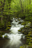 Stream at Roaring Fork Trail in the Smokies  Great Smoky Mountains National Park  Tennessee  USA
