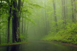 Foggy Morning  Roaring Fork Trail  Great Smoky Mountains National Park  Tennessee  USA