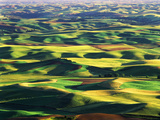 Contour Farming in Palouse Farm  Washington  USA