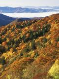 Deep Creek Valley  Great Smoky Mountains National Park  North Carolina  USA