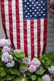 Hydrangeas with American Flag  Block Island  Rhode Island  USA