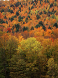 View of Autumn Forest  Vermont  USA