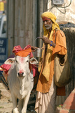 Sadhu  Holy Man  with Cow During Pushkar Camel Festival  Rajasthan  Pushkar  India