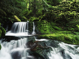 Whitewater Creek Falls  Willamette National Forest  Oregon  USA