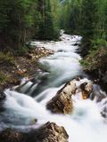 View of Crystal River Colorado  Gunnison National Forest  Colorado  USA