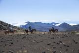 Horseback Trail Ride  Haleakala National Park  Maui  Hawaii  USA