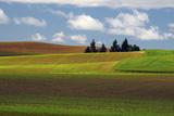 Agriculture  Palouse View  Whitman County  Washington  USA