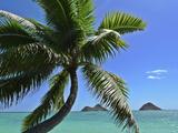 Mokulua Island  Lanikai  Kailua  Oahu  Hawaii  USA