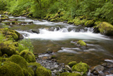 Tanner Creek  Columbia River Gorge National Scenic Area  Oregon  USA
