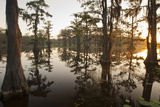 Caddo Lake  Texas  USA