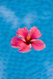 Flower in the Water for Decoration  Palau