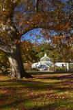 Autumn Colour  Botanic Gardens  Dunedin  Otago  South Island  New Zealand