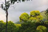 Rainforest  Pico Bonito Lodge  Honduras