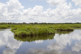 Airboat Swamp Tour  Lafitte  Louisiana