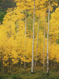 View of San Juan National Forest in Autumn  Colorado  USA